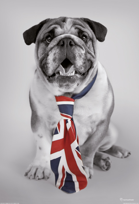 Deco Wall Mural – British Bulldog