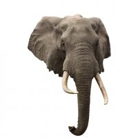 Wall Decal Elephant Mount