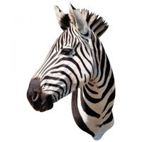 Wall Decal Zebra Mount